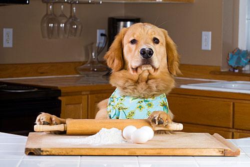 dog-baking